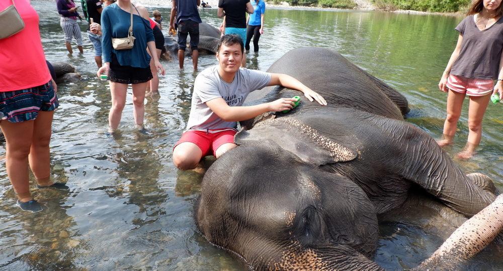Elephant Paket Tour Tangkahan