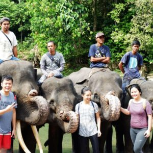 Gajah Medan Tangkahan