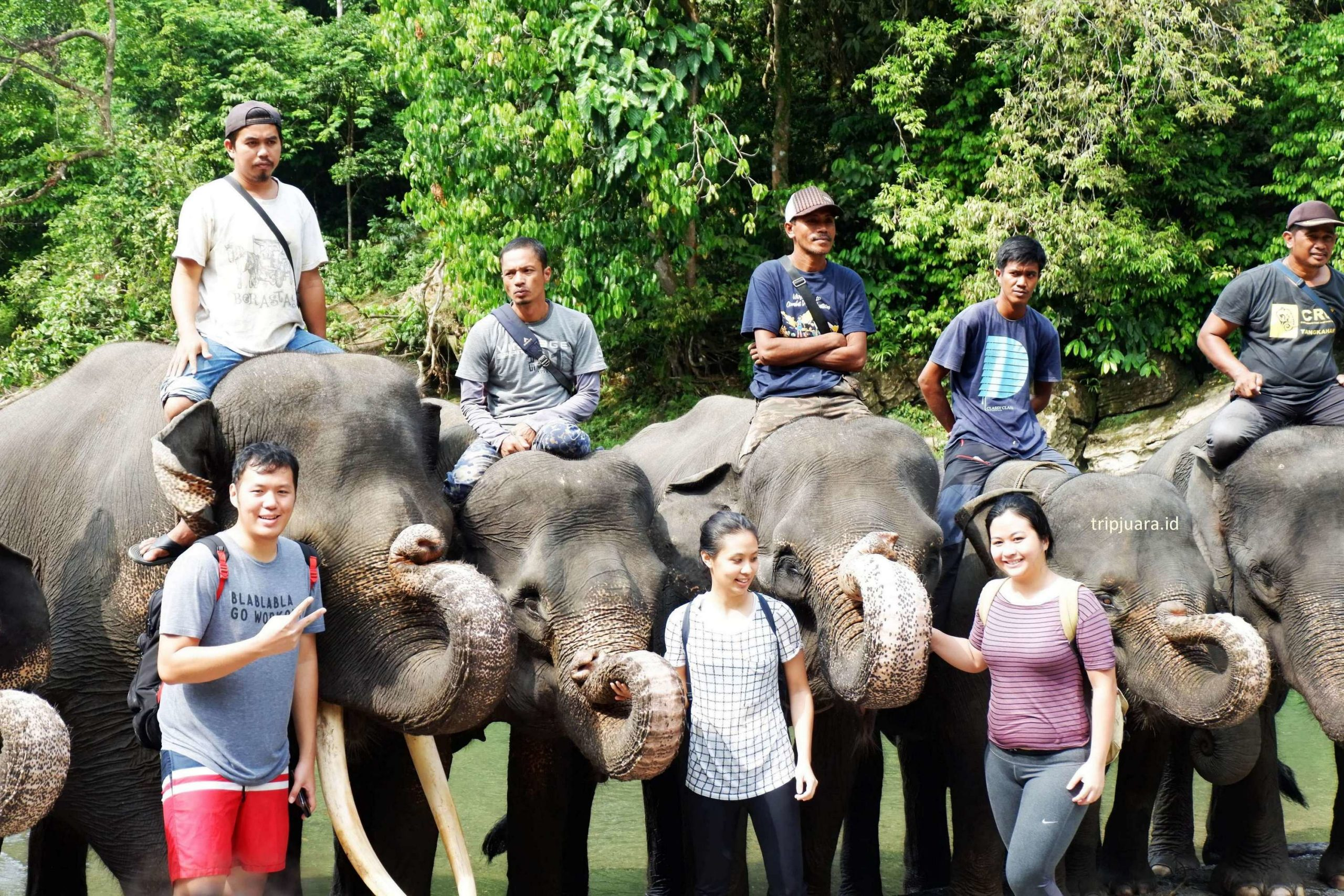 One Day Trip Tangkahan | Wisata Gajah Program