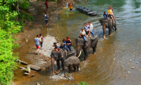 The Hidden Paradise Tangkahan Tour