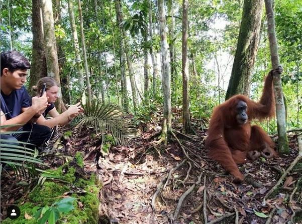 Open Trip Bukit Lawang   Foto Orangutan