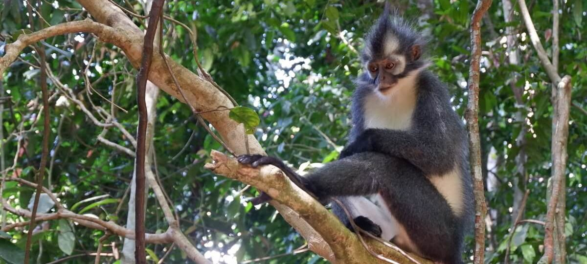 Bukit Lawang Tour Package - Thomas