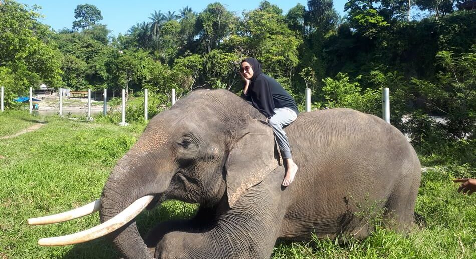 Tangkahan Tour Packages