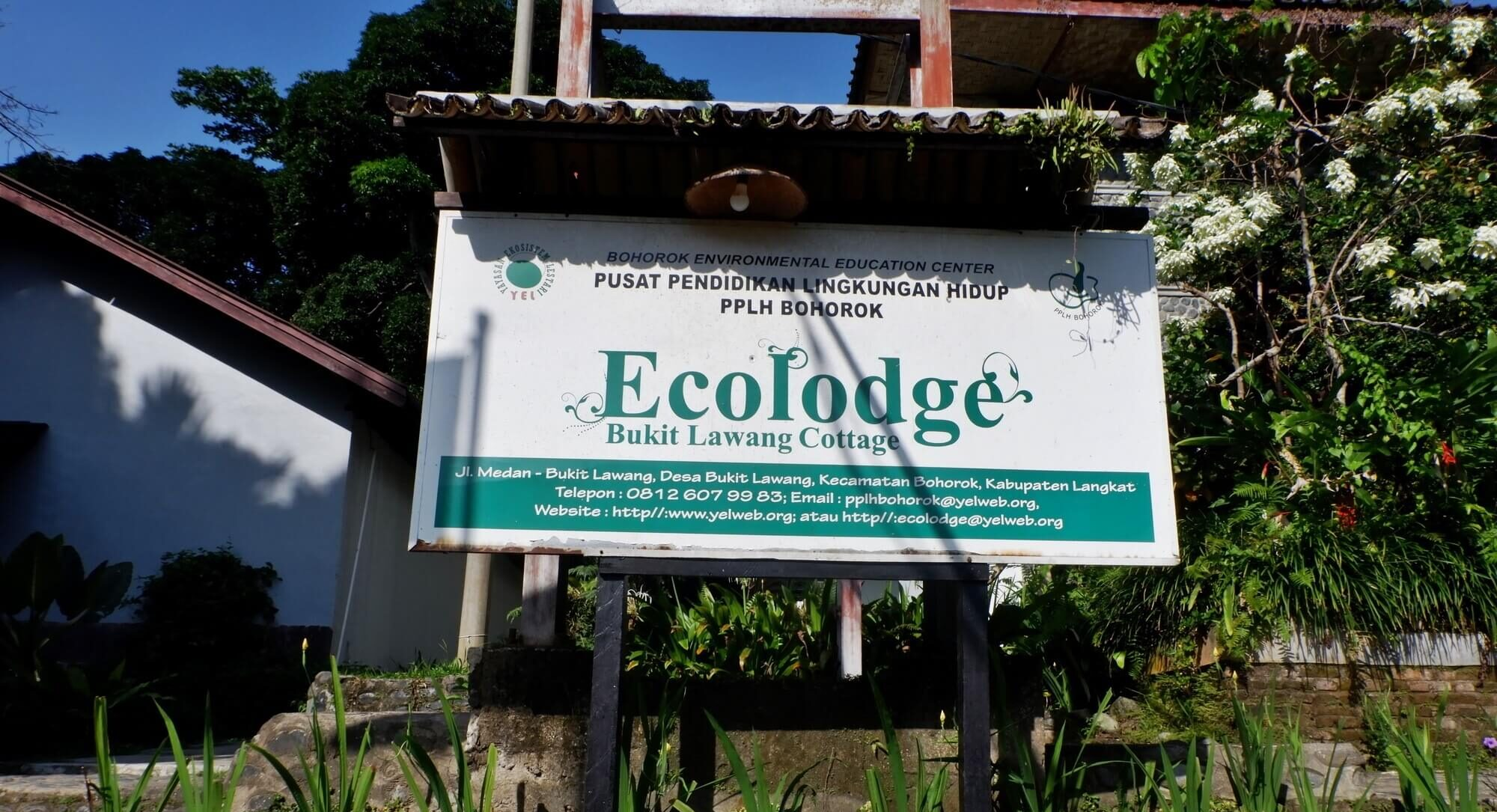 Ecolodge Bukit Lawang Penginapan Medan