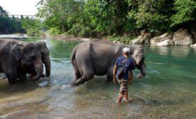 Konservasi Gajah Ekowisata Tangkahan