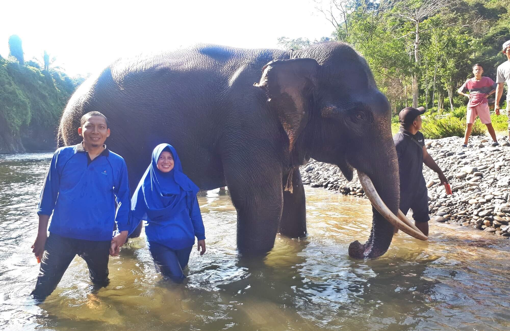 Memandikan Gajah Tangkahan