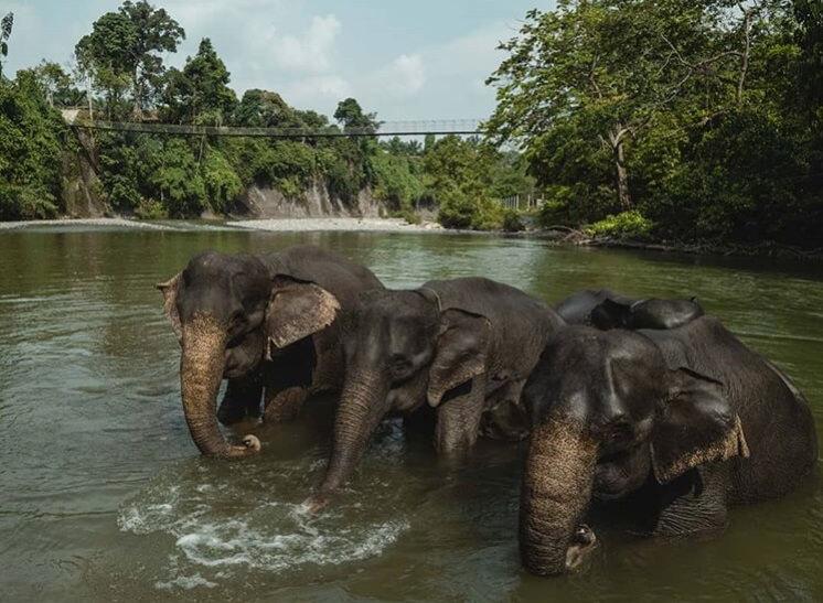 Konservasi Gajah Tangkahan - Terrario Tangkahan
